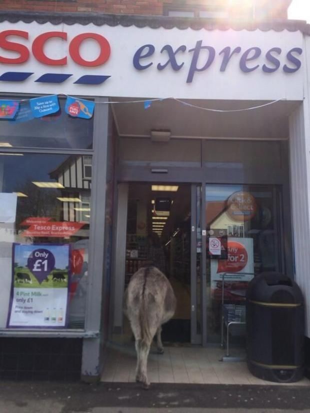 Daily Echo: A donkey strolls into Tesco Express in Brockenhurst