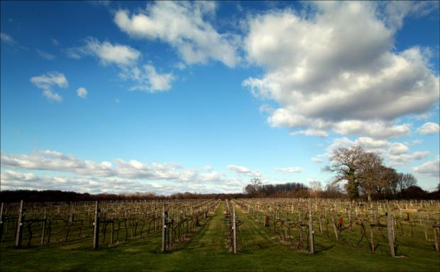 Wickham Vineyard sold for £1.6m