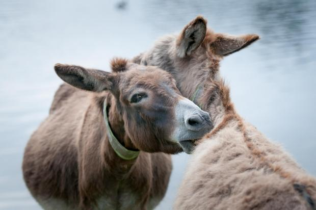 Donkeys in new attack at beauty spot