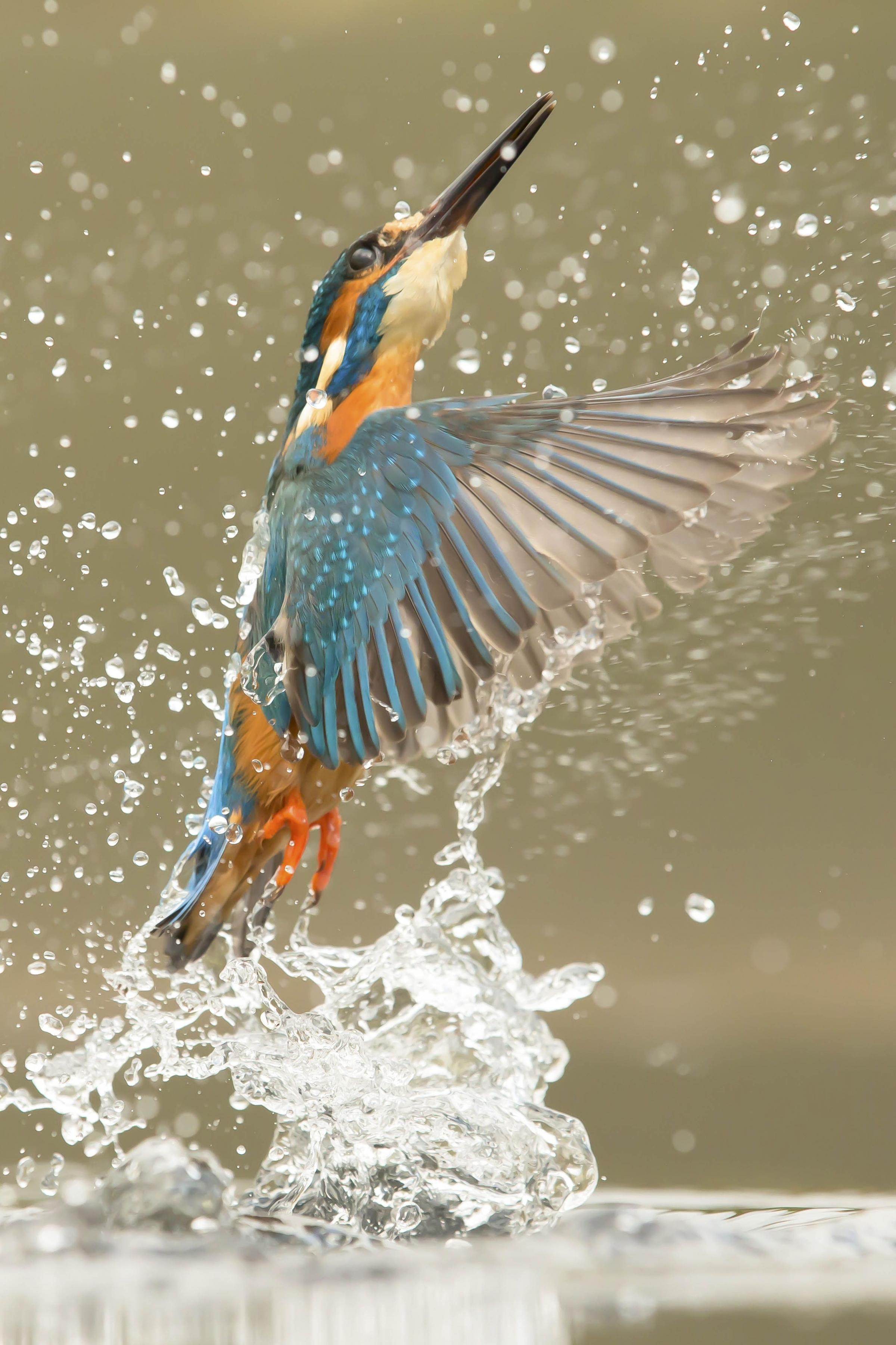 Last year's winning entry, Kingfisher Diving by Tom Way.