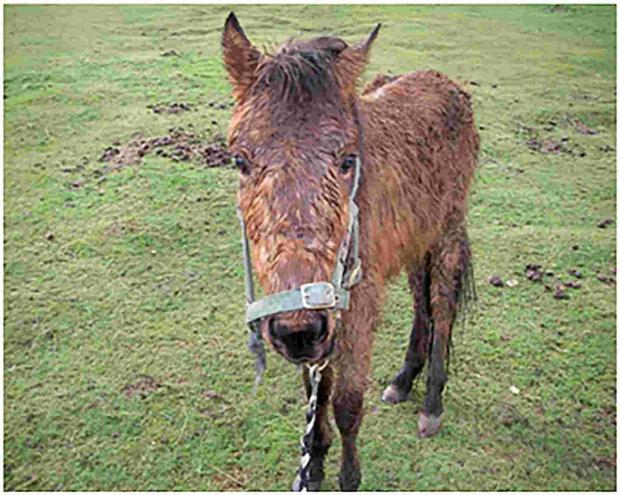 Daily Echo: Investigation into horses being dumped at Hamble Airfield