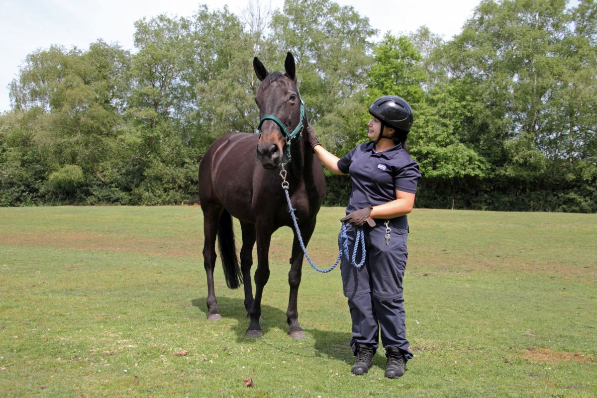 RSPCA groom Izi Reeves with the mare Faith.