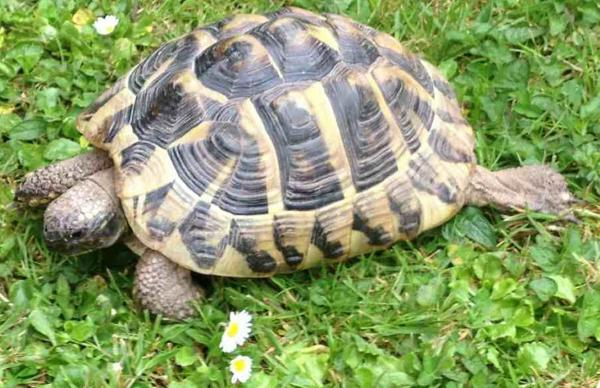 Pet tortoises go missing after car roof mishap