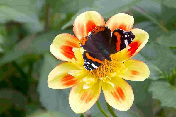 Big butterfly count launched in Hampshire