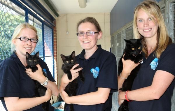 Blue Cross staff Katy Trout, Ruth Saunders and Kirsty Smith with the moggies