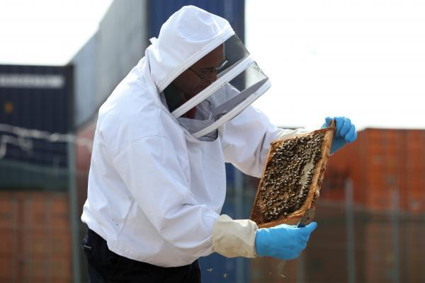 Pete Terry moves bees at the Southampton container terminal
