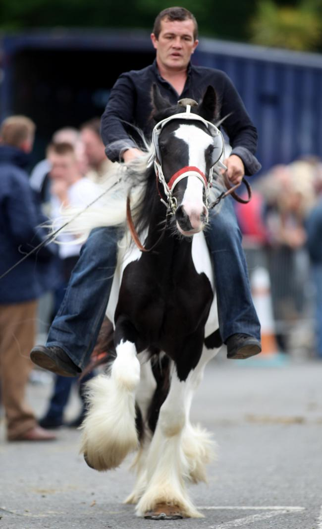 Wickham Horse Fair                         Tuesday 20th May 2014 (26575003)