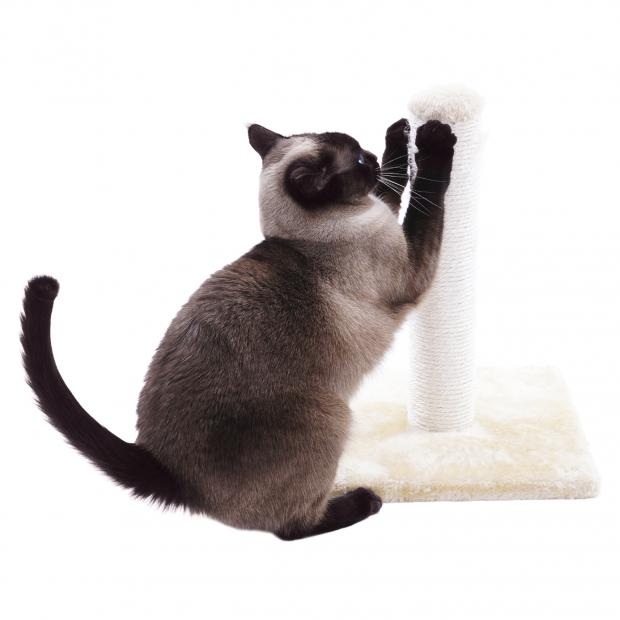 Trixie Pet Products Isaba Cat Tree in addition Best Cat Scratchers Scratching Post Furniture Amazon A6991141 moreover C27425 together with Lion Paw Claws further Cat. on cat scratch pads for claws