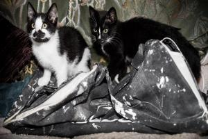 Kittens found dumped in filthy holdall