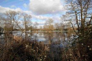 Trees to be chopped down at nature reserve