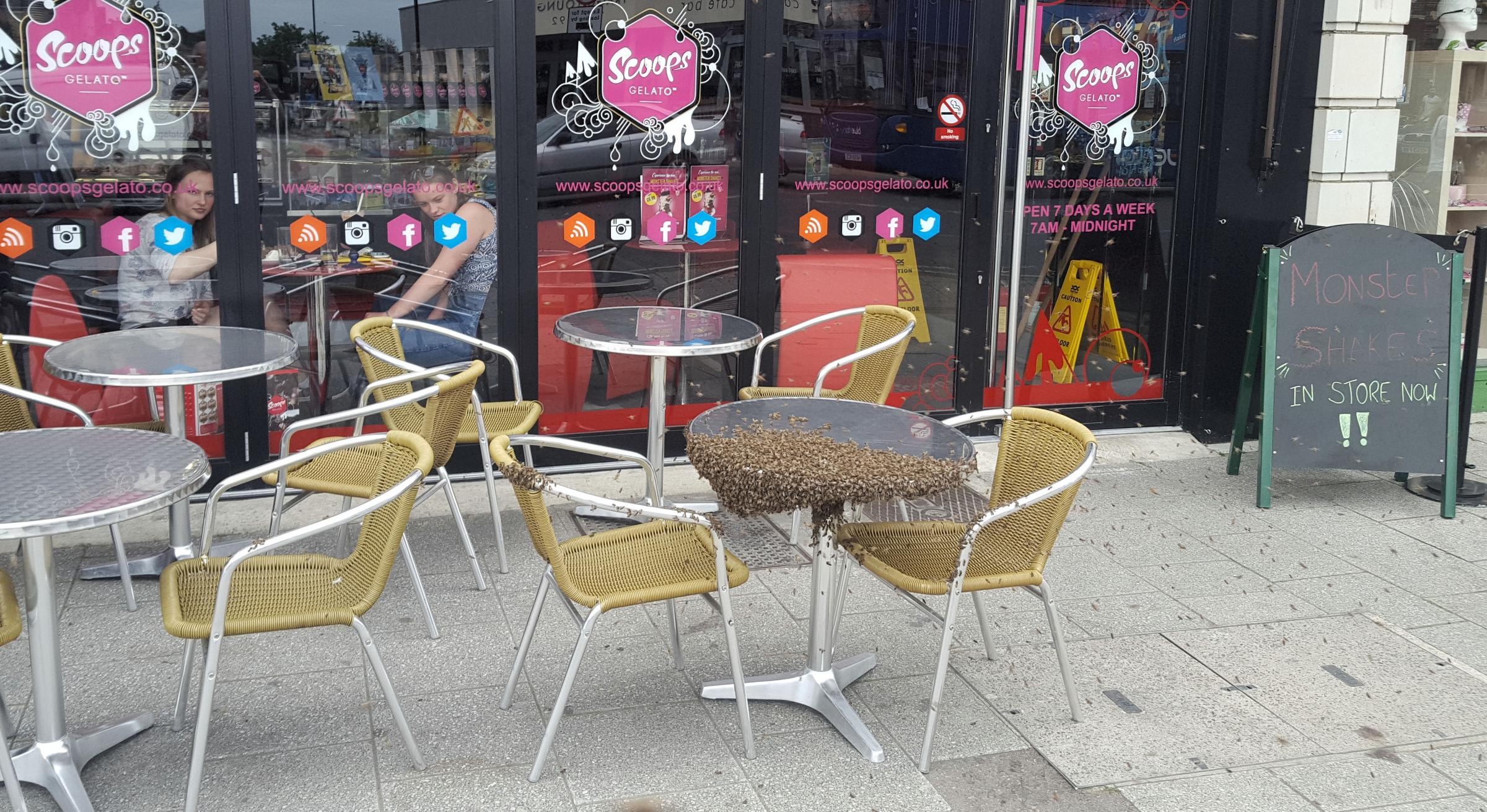 Swarm Of Bees At Scoops Gelato In Portswood Road Forces City