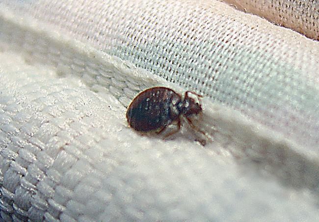 Image result for Bed Bug Infestation