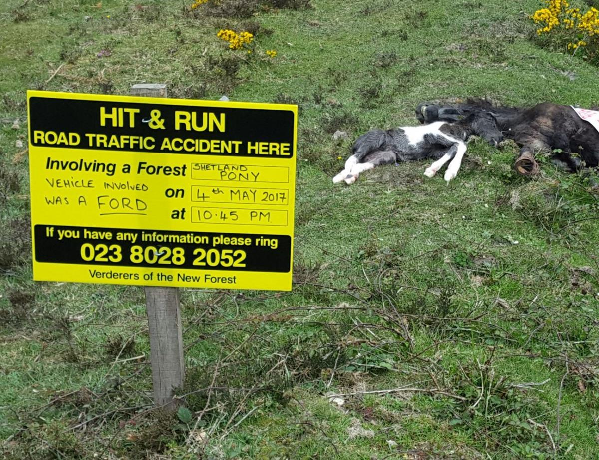 Police hunting hit and run driver who left pregnant mare and foal