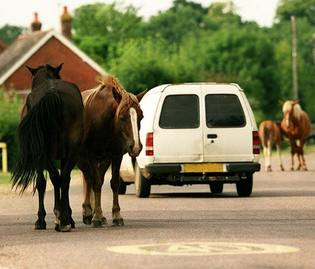 Daily Echo: TRANQUIL SCENE: New Forest ponies and vehicles on the roads of the New Forest . . . but this could be a scene of the past?