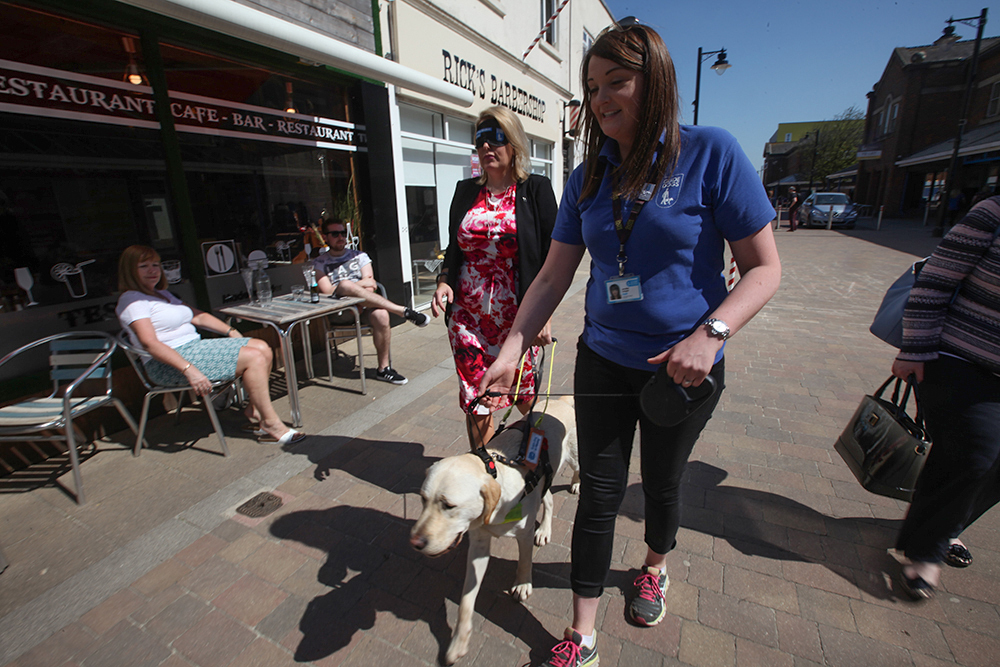 Mims Davies is guided round Eastleigh by guide dog in training Gyp