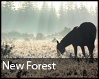 New Forest District News