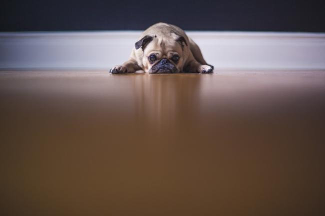 Sad dog. Picture from Pixabay